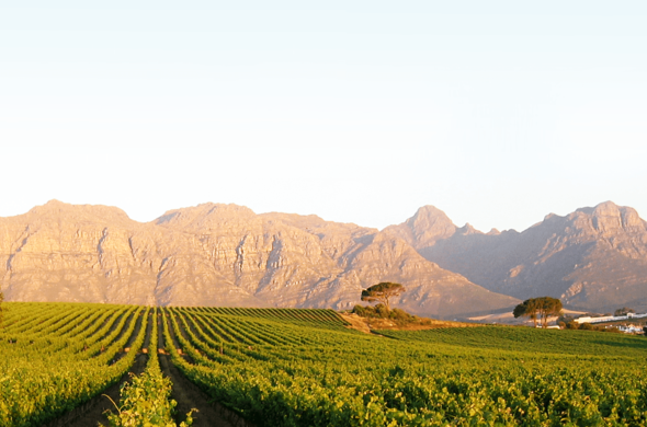 Conference in the Winelands.