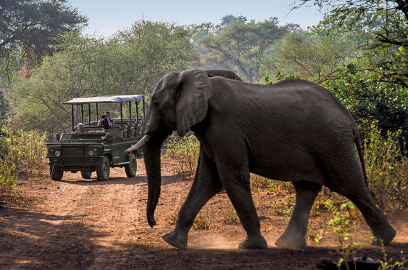 Enjoy game drives at Outpost Safari Lodge.
