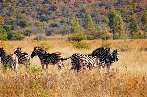 Game viewing at Zebra Lodge.