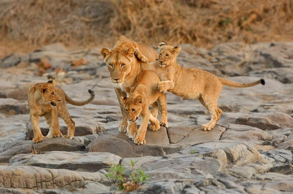 See a variety of wildlife on your safari stay.