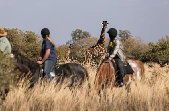 Horseback safari at Zebula Lodge.